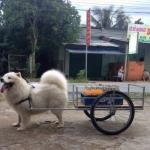 Chú chó bông chở thùng hàng