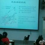 Chó nhà giàu làm sinh viên đại học ở Trung Quốc