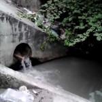Cô gái nhảy xuống cống tắm dùng gạch tự đập vào đầu mình