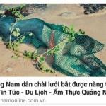 Tìm được tác giả bài viết nàng tiên cá ở Quảng Nam
