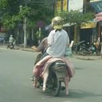 Ngồi trên xe lợn để đi đường