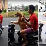 Sốc thanh niên cho chó lái xe máy