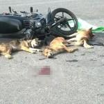 Xe mô tô phóng nhanh tông vào chó bị ngã kinh hoàng