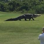 Video cá sấu khổng lồ chạy trên sân tập Golf