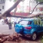 Cây phượng bị đổ đè vào xe Ford EcoSport ở Hà Nội