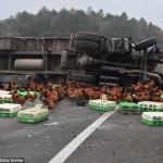 Huy động hàng chục cảnh sát đuổi bắt gà trên cao tốc