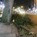 Gia đình bị thương vì nhánh cây rơi từ trên xuống