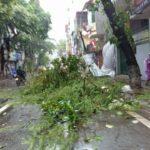 Kinh hoàng cây khô đổ vào đầu nữ sinh đang đi bộ trên đường