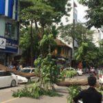 Hà Nội: Lexus bị cây lớn đổ đè vào nóc xe