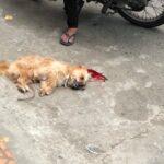 Chú chó bị đập chết ngoài đường do tè vào chân nam thanh niên ?