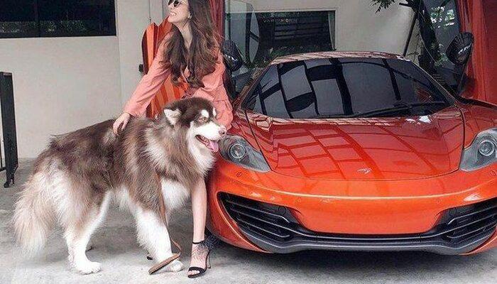 hot girl khoe siêu xe